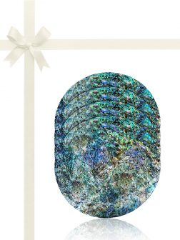 GALÁPAGOS COLLECTION Abalone Gift Set of 4 Drinks Coasters B